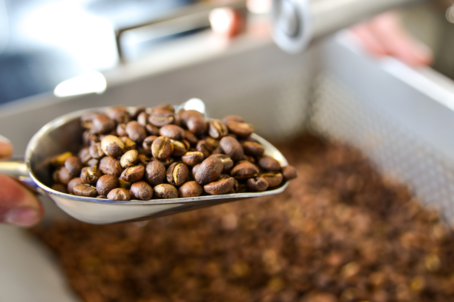 coffee beans - roasted in house